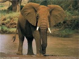 Faites une défense d'éléphant !